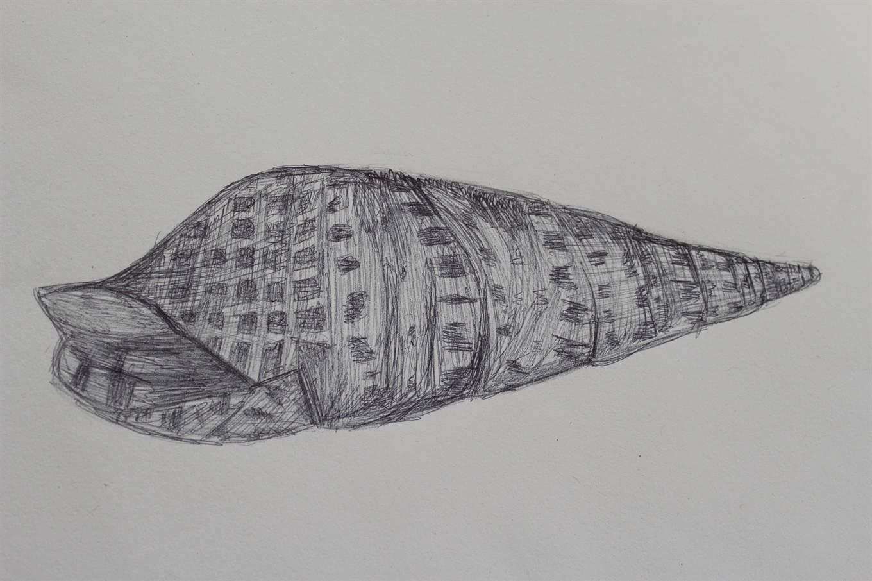Line Drawing Natural Forms : Benjamin britten year art natural forms